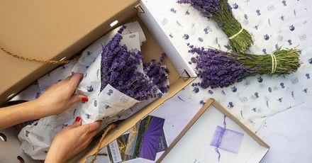 Caslte Farm Lavender 179 9799