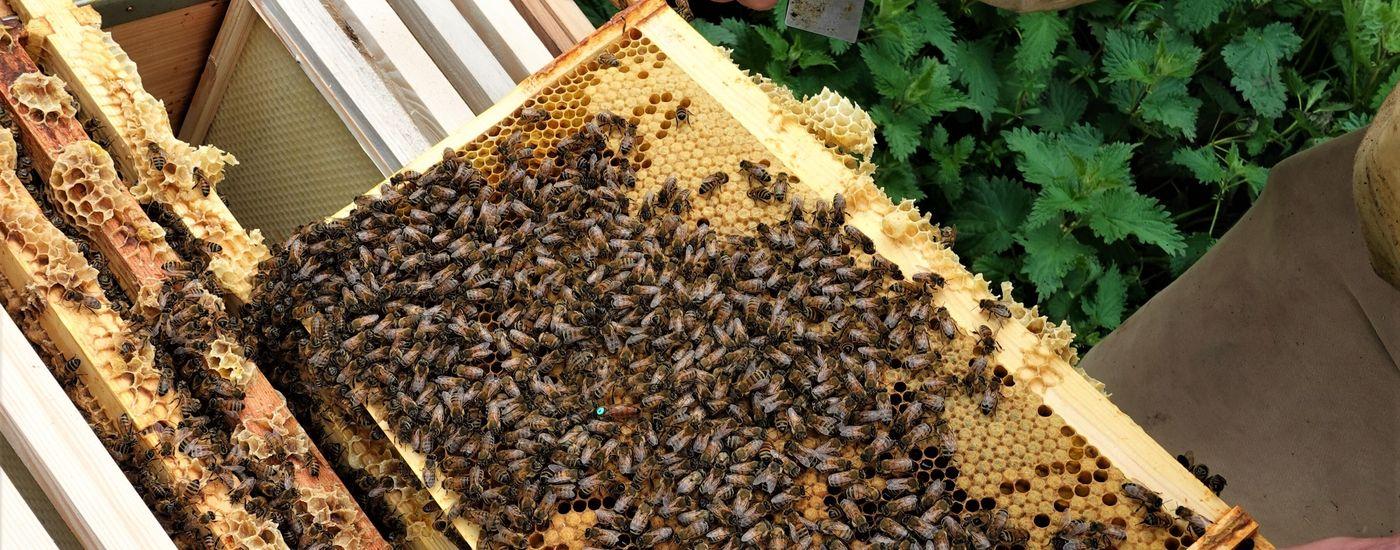 Brogdale bees 2