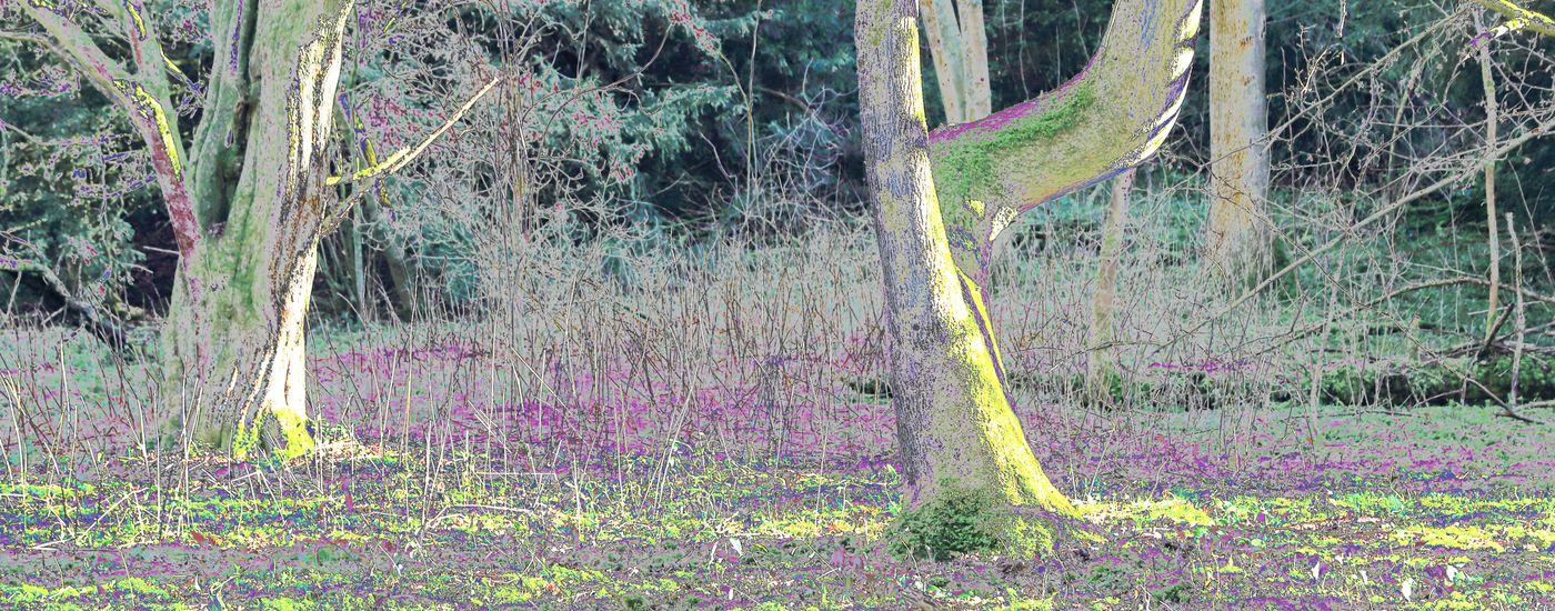 Liz Garnett Gorham Wood on the Augustine Camino Bicknor Kent