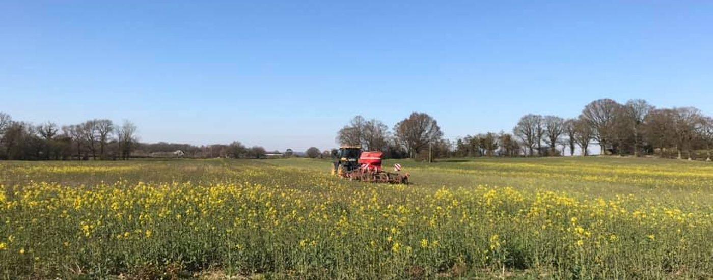 Pure Kent Harvest